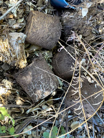 Earth from pots with the bare dried roots of seedlings