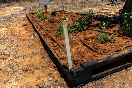 An earthen bed prepared for planting with a spot-drip irrigation system at special site , where primary school students may learning about agriculture and farming