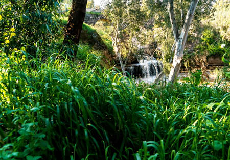 Harod Stream in the Beit She'an Valley. Waterfall and old aqueduct in the eucalyptus grove. Israel