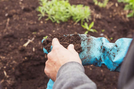 A man agrarian assesses the quality of the soil for planting plants. The farmer on the vermiferm demonstrates the texture of humus made by worms. The concept of soil quality and farming