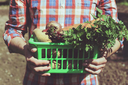 collect: A man holds a plastic basket with vegetables on the background of the garden. A young farmer in a plaid shirt with a crop. Potatoes, beets, carrots and a bunch of parsley