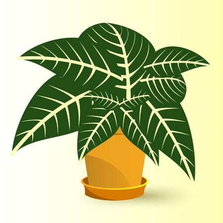 plant pot: vector illustration of Sanchezia plant in a pot isolated on yellow background