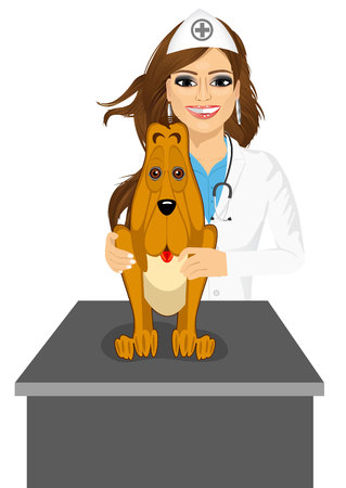 bloodhound: portrait of cute bloodhound sitting on table visiting veterinarian