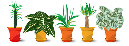five pots with plants isolated on white background