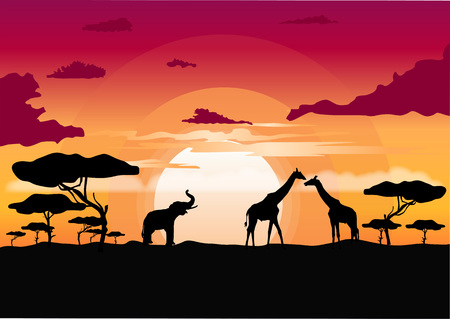 serengeti: African sunset in the savannah with silhouette of giraffe, elephant and lone acacia tree