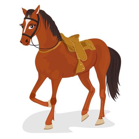 bridle: Beautiful saddled horse standing isolated on white background