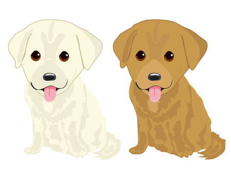 labrador: portrait of two cute labrador puppies isolated over white background