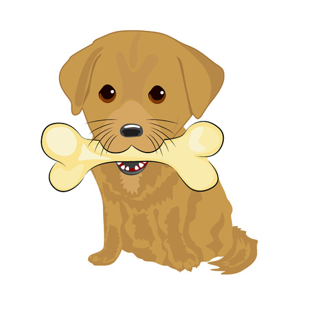 labrador puppy: portrait of cute labrador puppy holding big bone with mouth isolated on white background Illustration