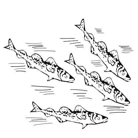 school of fish: vector illustration - hand drawn school of northen fish
