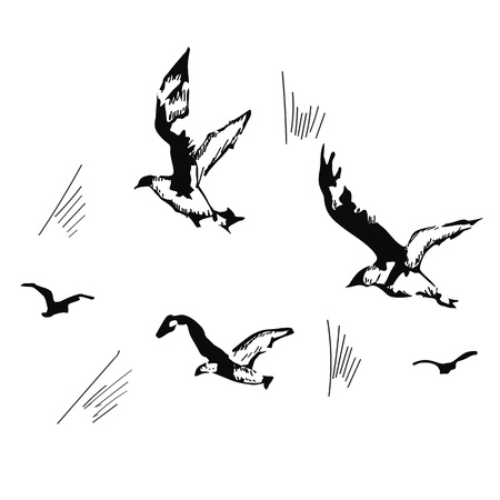 isolated over white: flying seagulls, hand drawn, vector illustration isolated over white background