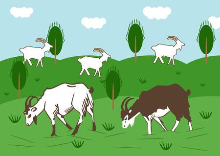 Domestic goats graze in a meadow in summer