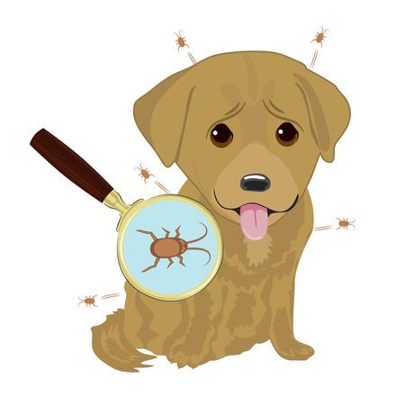 개 모피에 진드기입니다. 기생충 감염이 있고 개가 돋보기로 닫습니다. 일러스트
