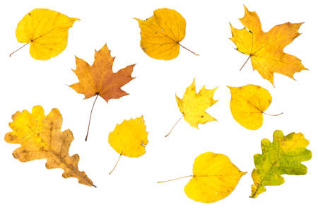 Autumn bright leaves of different trees on a white background