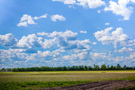 Azure sky with white clouds. Green field with fresh grass. Perspective view.