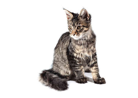 Kitten isolated on white background. Studio photo. A beautiful image for a veterinary clinic. Stock fotó