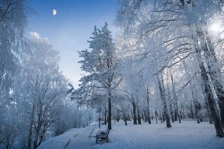 Winter evening - blue twilight is gathering in the park - clear sky and moon
