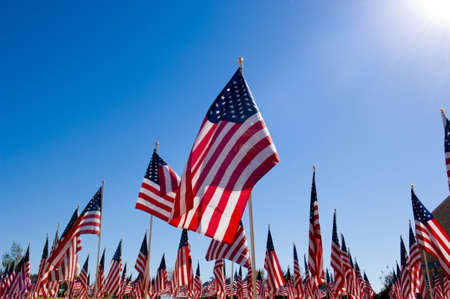 armed services: Unitied States Flags displayed as tribute of military veterans in the United States of America