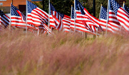 sagebrush: Unitied States Flags displayed as tribute of military veterans in the United States of America next to field of sagebrush