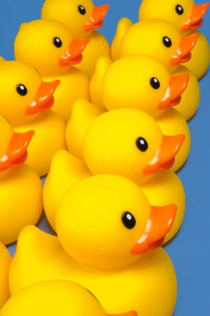 group on yellow rubber ducks on blue - ducks in a row