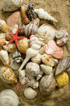 A background consisting of a variety of sea shells on sand