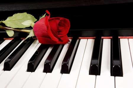 keyboard: A single beautiful red rose lying on top of a piano keyboard
