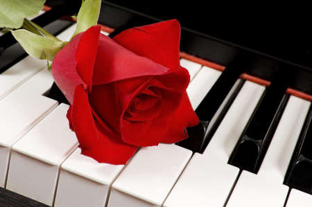 A single beautiful red rose lying on top of a piano keyboard Stock Photo - 5230174