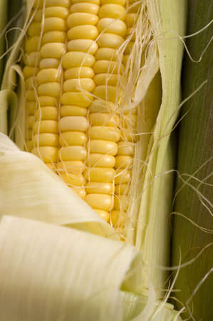 Un fondo de maíz en la mazorca Foto de archivo - 5230308