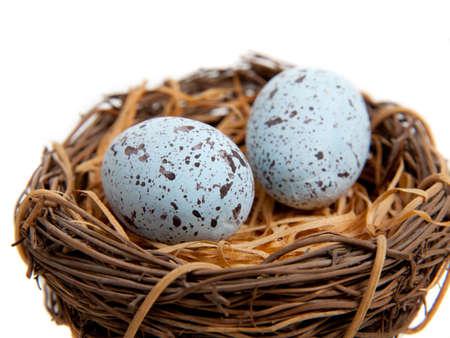 Twee blauwe robins ei in een nest - huis decoratie