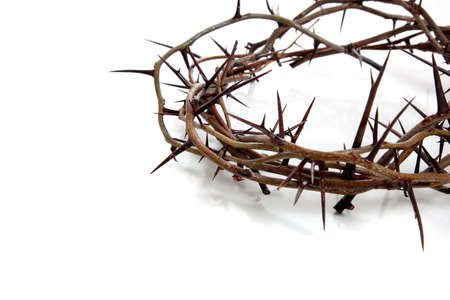 crown background:  A crown of thorns on a white background