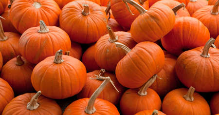 Piles of assorted pumpkins photo