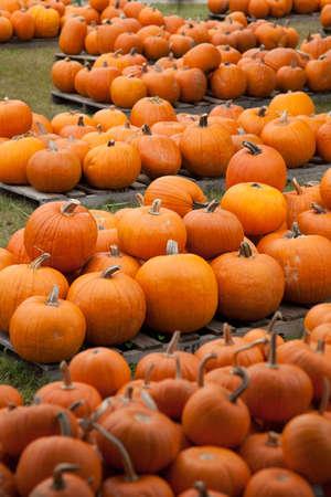 Piles of assorted pumpkins photo