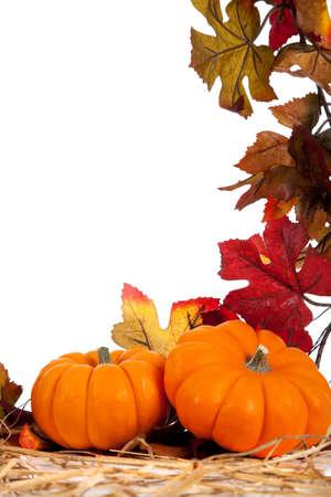 호박, 조롱박, 사과, 포도, 미니 옥수수와 배를 포함하여 배경으로 가을 야채 스톡 콘텐츠