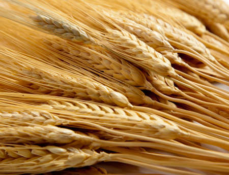 comprised: a background comprised of golden shocks of wheat