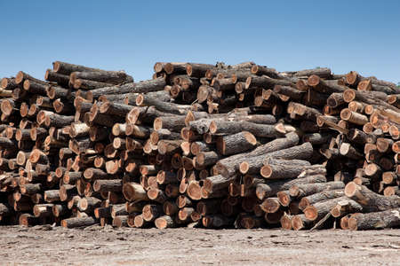 A large stack of freshly cut logs