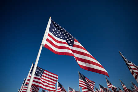 american flags: Large group of American Flags commemorating a national holiday, veterans day, independence day, 911, etc