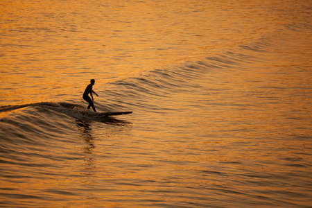 surf board: Single surfer at sunset on a calm ocean