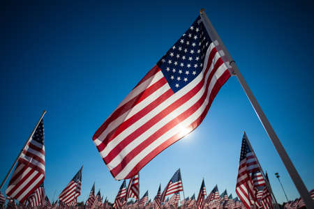 american flag waving: A dispaly of many American flags with a sky blue background