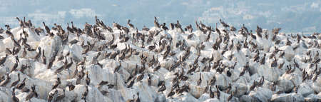 Pelican Rock in San Mateo County, California Фото со стока