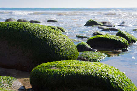 moss: A seascape with moss covered rock on California coast