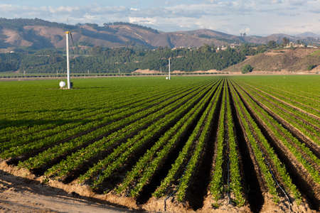 An agricultural field on a sunny day in California Foto de archivo