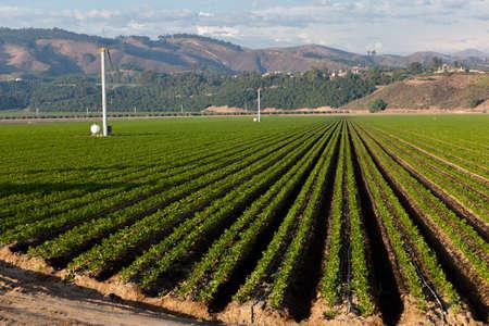 agricultura: Un campo agrícola en un día soleado en California