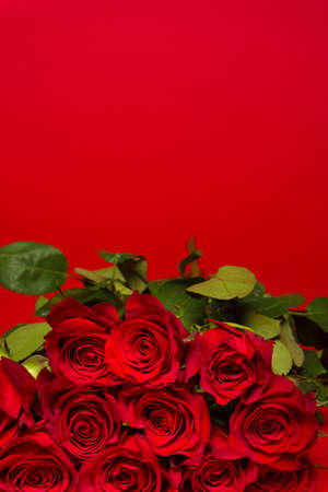 true love: A stack of red roses on a red background, Valentines day gift, present.