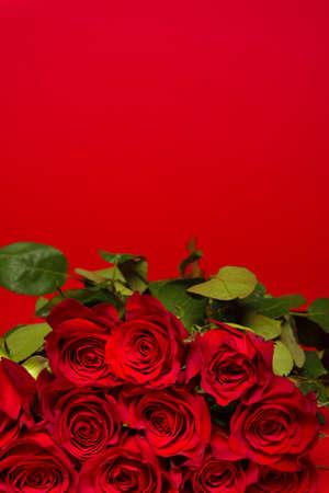 rosas rojas: Una pila de rosas rojas sobre un fondo rojo, regalo del día de San Valentín, presente.