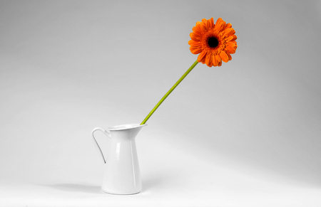 Flower in white vase isolated on the white background