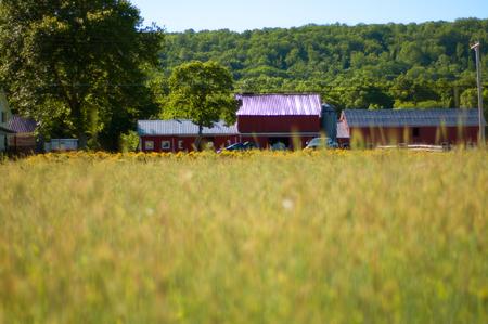 Beautiful green barley field, rural scenery and farm