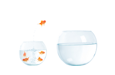 Gold fish jumping out of the fishbowl on the white background Stock Photo