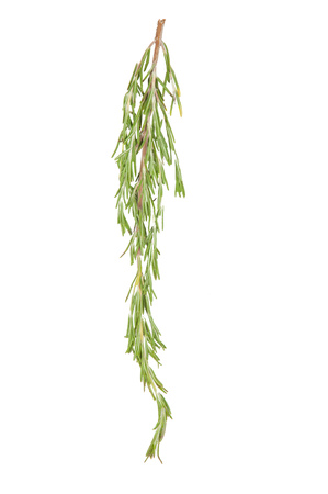 Fresh bunch rosemary on white background