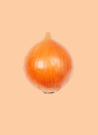 Fresh onion levitate in air on orange background. Concept of vegetable levitation.