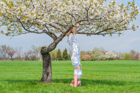 Beautiful woman is practicing yoga, doing Salamba Sirsasana exercise, standing in headstand pose near blossom tree at the park.