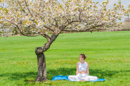 Beautiful young woman is practicing yoga or meditating sitting in Lotus pose near blossom tree at the park. Girl doing Padmasana pose. Stock Photo